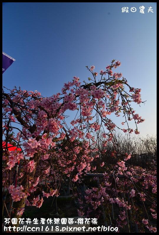 芬園花卉生產休憩園區-櫻花張DSC_3226