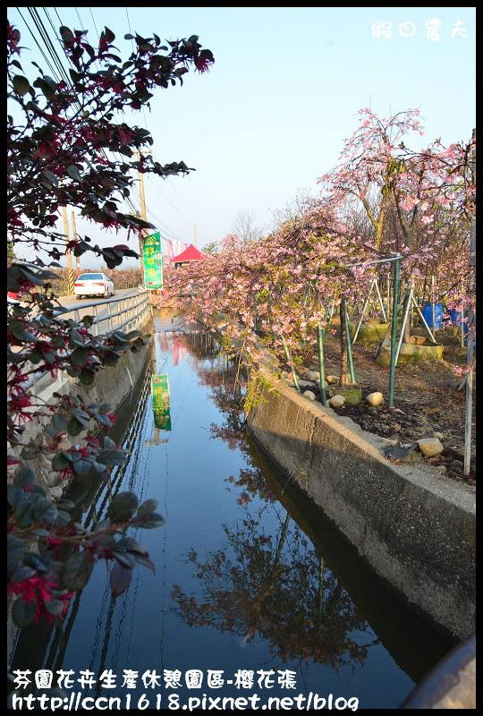 芬園花卉生產休憩園區-櫻花張DSC_3232