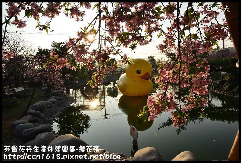 芬園花卉生產休憩園區-櫻花張DSC_3234
