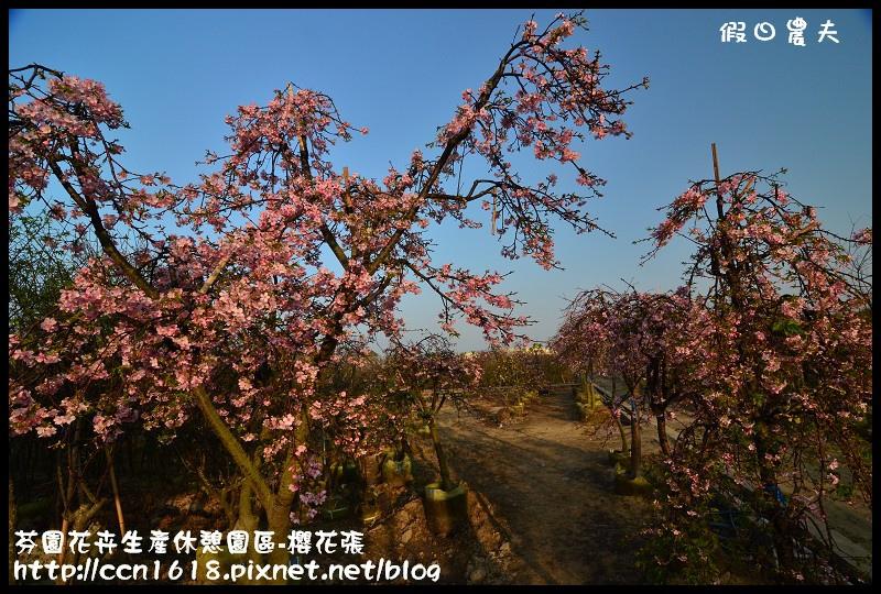 芬園花卉生產休憩園區-櫻花張DSC_3237