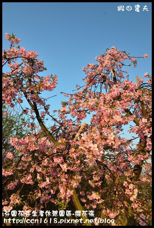 芬園花卉生產休憩園區-櫻花張DSC_3239