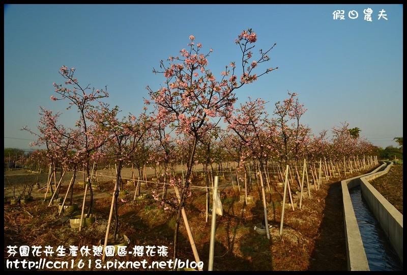 芬園花卉生產休憩園區-櫻花張DSC_3244