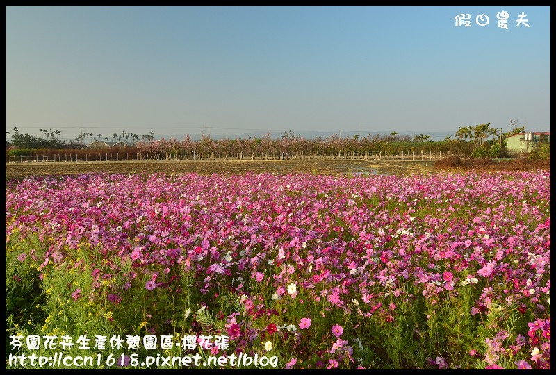 芬園花卉生產休憩園區-櫻花張DSC_3245