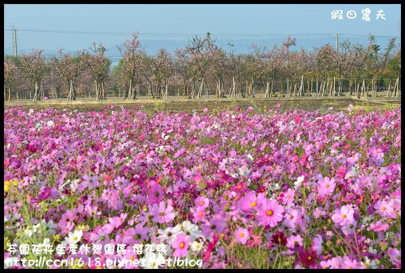 芬園花卉生產休憩園區-櫻花張DSC_3248