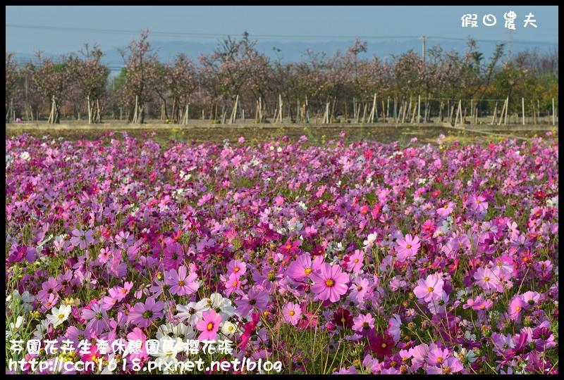 芬園花卉生產休憩園區-櫻花張DSC_3249