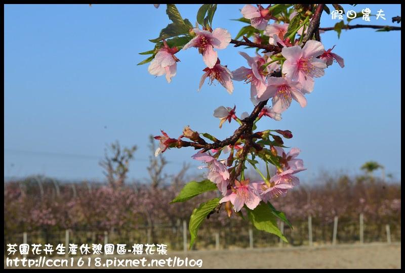 芬園花卉生產休憩園區-櫻花張DSC_3261