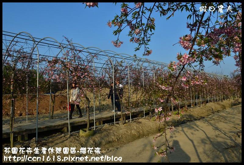 芬園花卉生產休憩園區-櫻花張DSC_3271