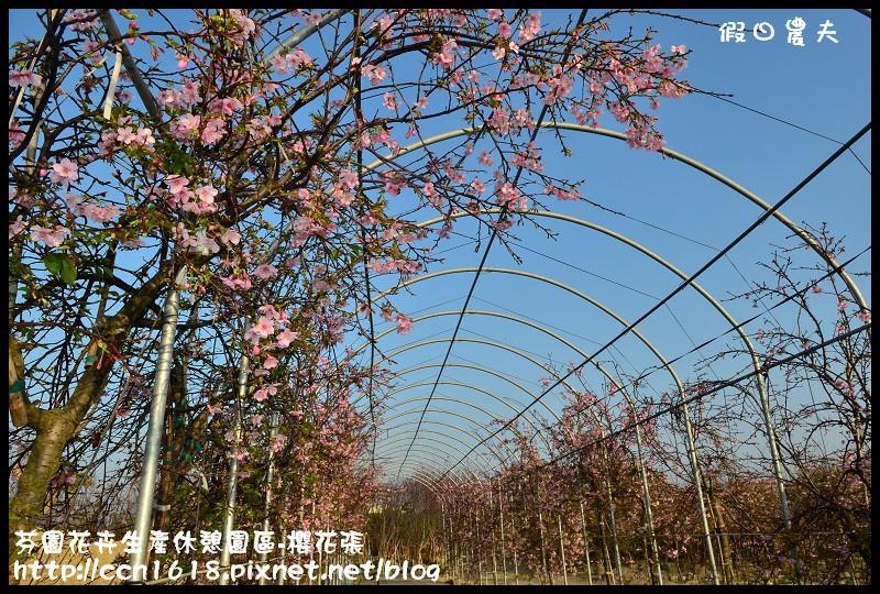芬園花卉生產休憩園區-櫻花張DSC_3284