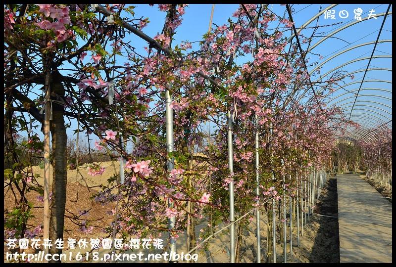 芬園花卉生產休憩園區-櫻花張DSC_3286
