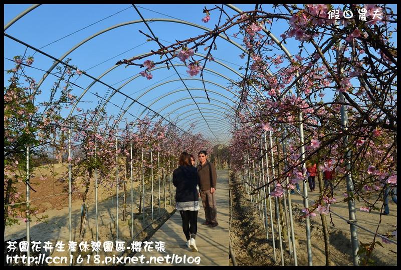 芬園花卉生產休憩園區-櫻花張DSC_3289