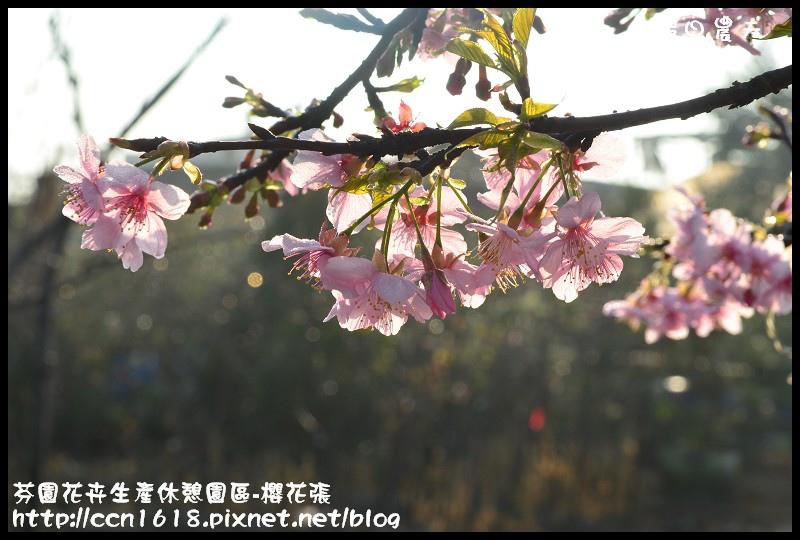 芬園花卉生產休憩園區-櫻花張DSC_3294