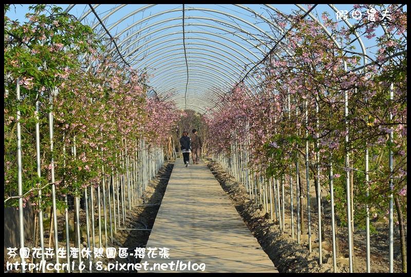 芬園花卉生產休憩園區-櫻花張DSC_3290