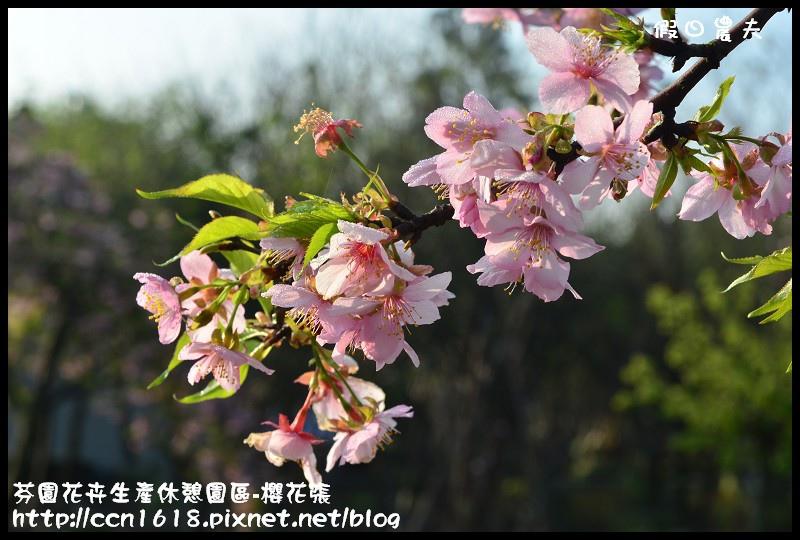 芬園花卉生產休憩園區-櫻花張DSC_3296