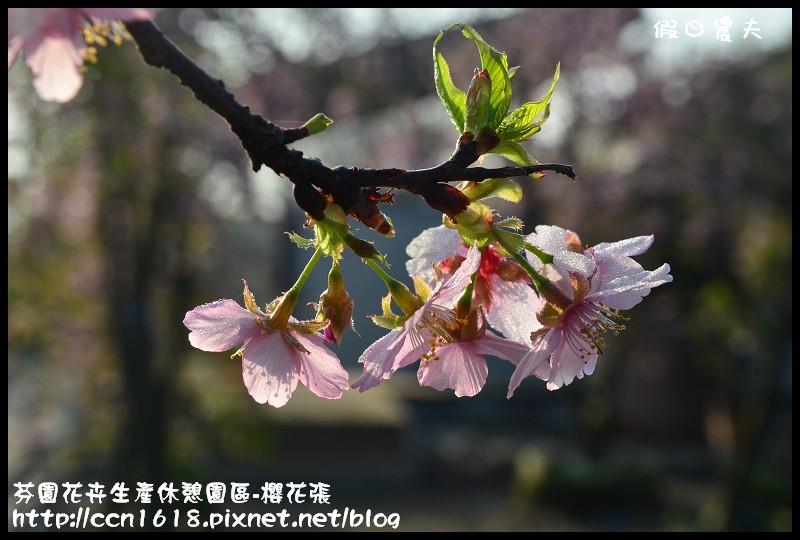 芬園花卉生產休憩園區-櫻花張DSC_3307