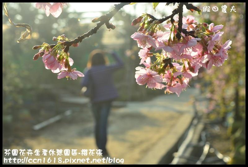 芬園花卉生產休憩園區-櫻花張DSC_3304