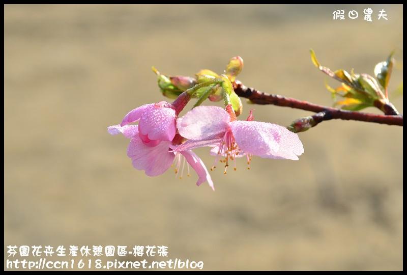 芬園花卉生產休憩園區-櫻花張DSC_3312