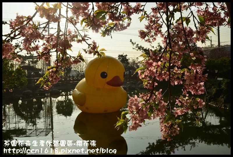 芬園花卉生產休憩園區-櫻花張DSC_3325