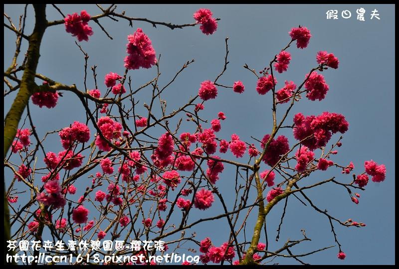 芬園花卉生產休憩園區-櫻花張DSC_3336