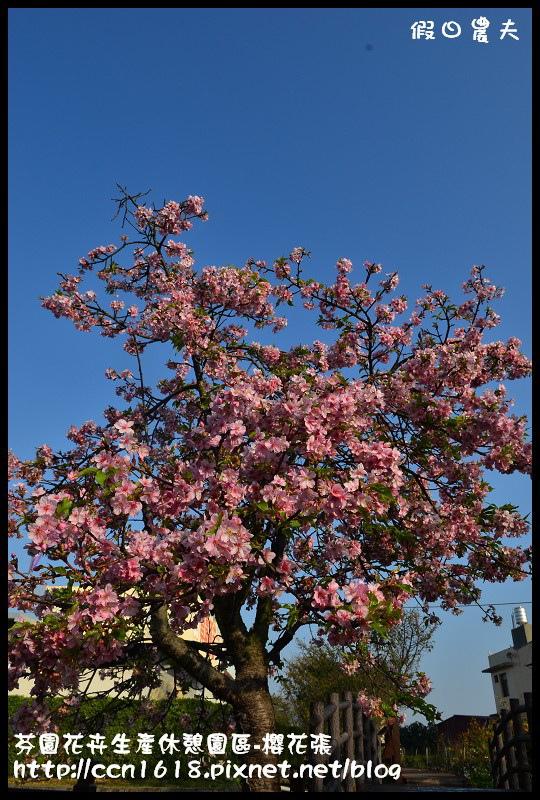芬園花卉生產休憩園區-櫻花張DSC_3342