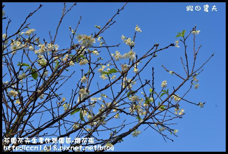 芬園花卉生產休憩園區-櫻花張DSC_3348