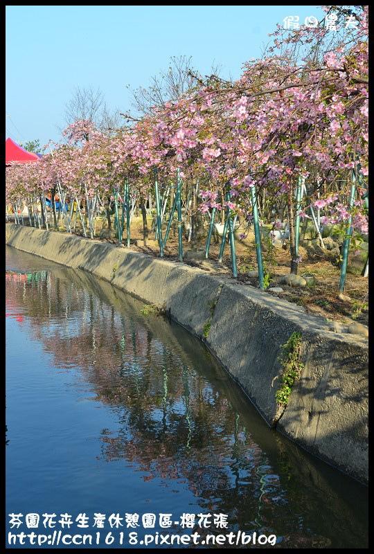 芬園花卉生產休憩園區-櫻花張DSC_3376