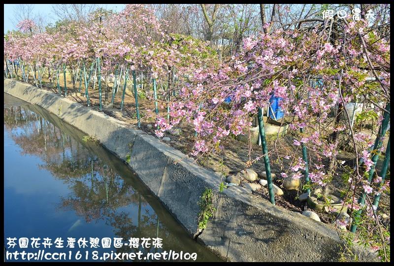 芬園花卉生產休憩園區-櫻花張DSC_3382