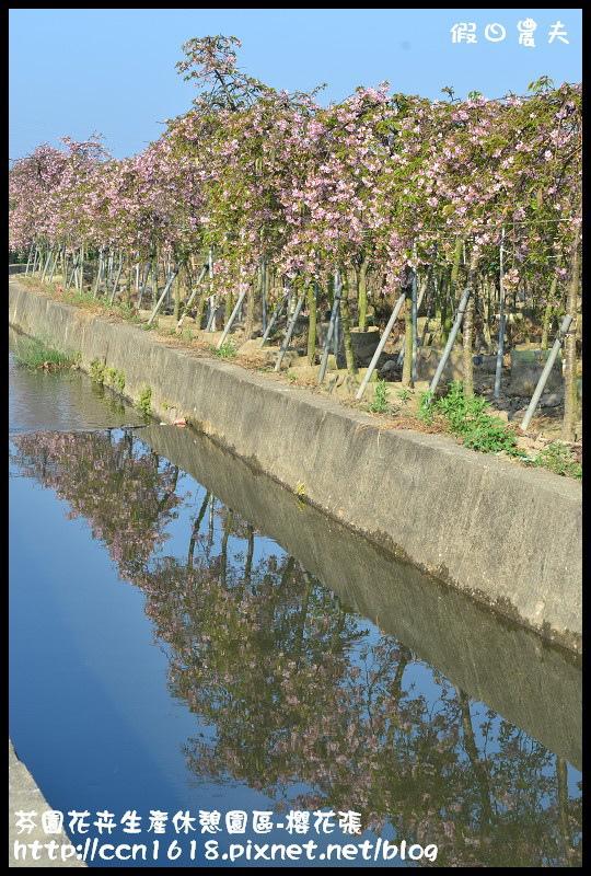 芬園花卉生產休憩園區-櫻花張DSC_3389
