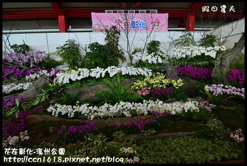 花在彰化-溪州公園DSC_3166