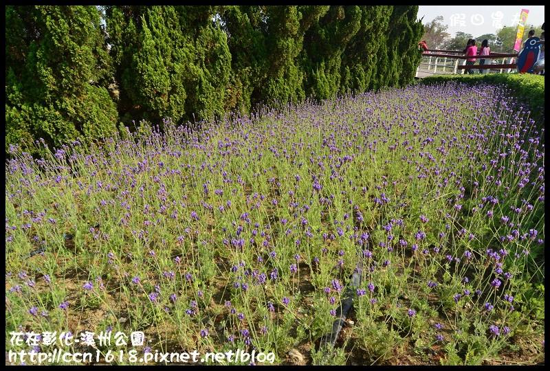花在彰化-溪州公園DSC_3205