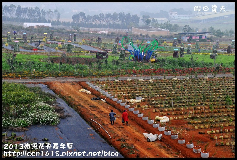 2013南投花卉嘉年華DSC_0372