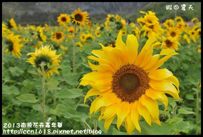 2013南投花卉嘉年華DSC_0588