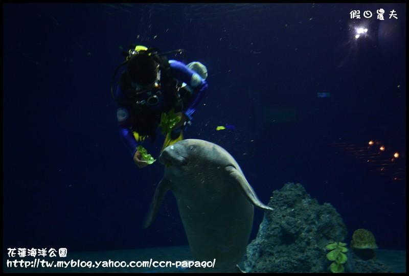 花蓮海洋公園_DSC6668