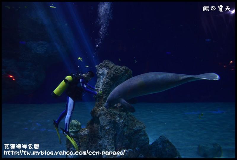 花蓮海洋公園_DSC6702