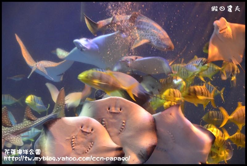花蓮海洋公園_DSC6730