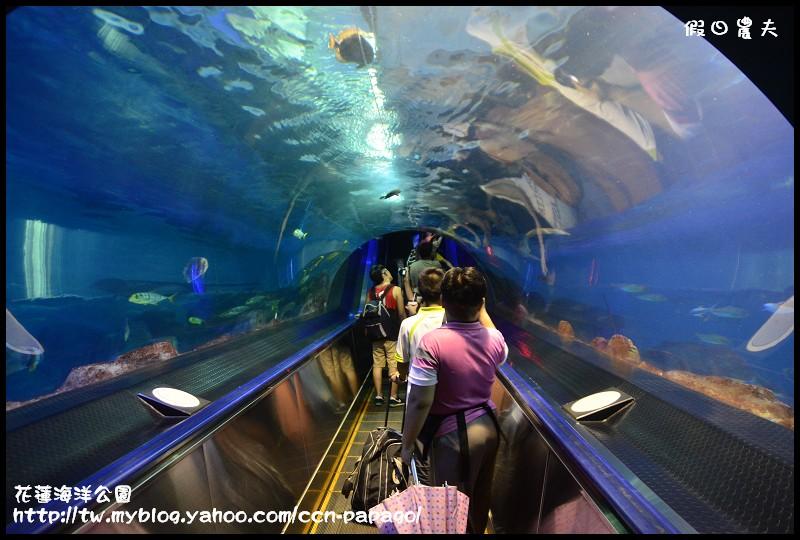 花蓮海洋公園_DSC6757