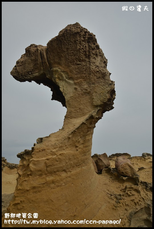 野柳地質公園_DSC3810