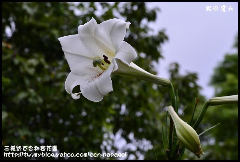 三義野百合秘密花園_DSC3002.jpg