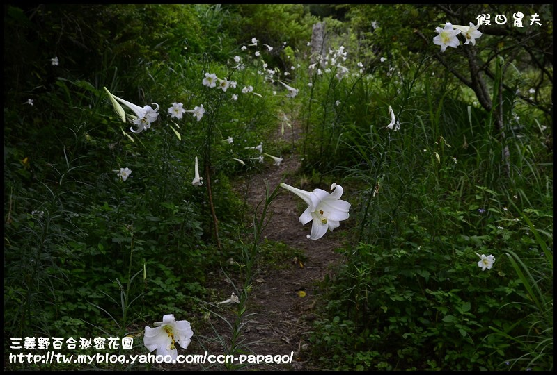 三義野百合秘密花園_DSC3003.jpg