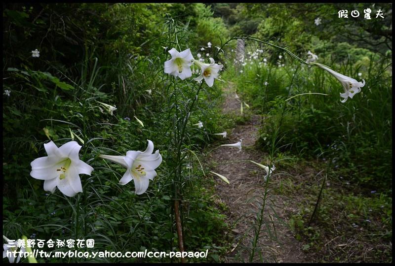 三義野百合秘密花園_DSC3006.jpg