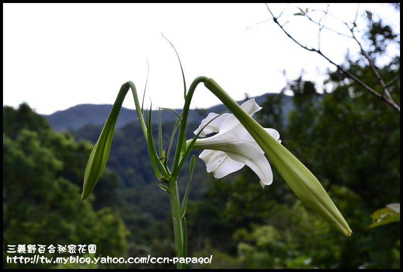 三義野百合秘密花園_DSC3016.jpg