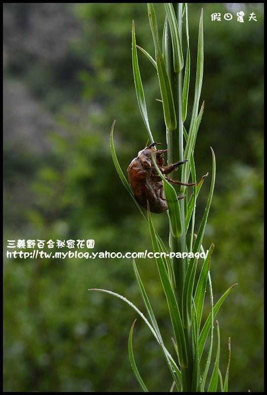 三義野百合秘密花園_DSC3067.jpg