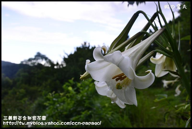 三義野百合秘密花園_DSC3020.jpg