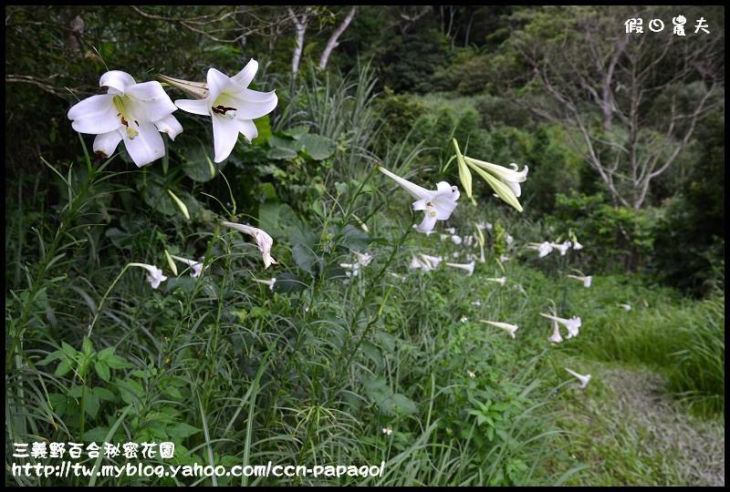 三義野百合秘密花園_DSC3024.jpg