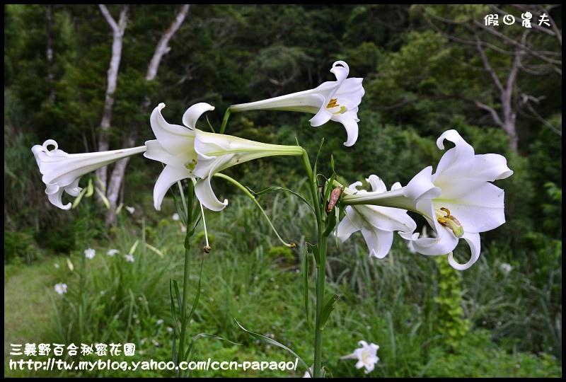 三義野百合秘密花園_DSC3025.jpg