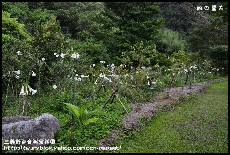 三義野百合秘密花園_DSC3033.jpg