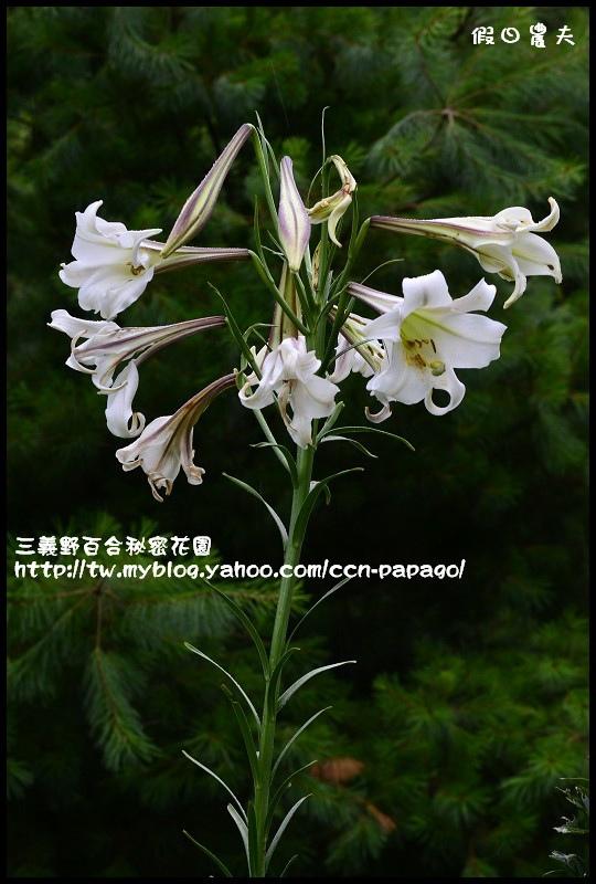 三義野百合秘密花園_DSC3051.jpg