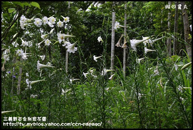 三義野百合秘密花園_DSC3054.jpg