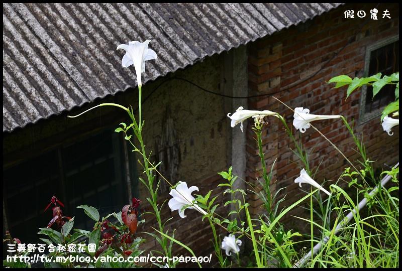 三義野百合秘密花園_DSC3060.jpg