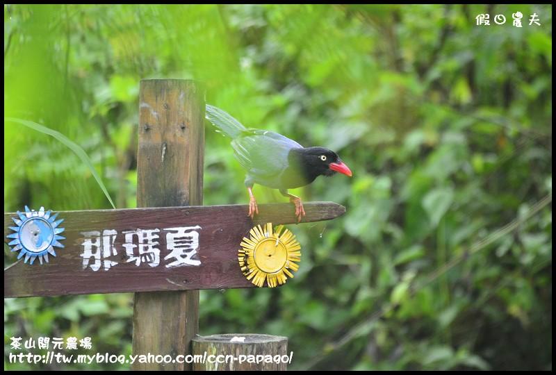 茶山開元農場_DSC1273
