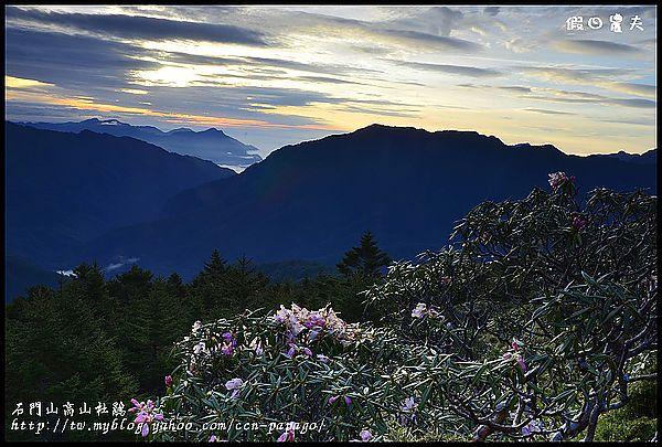 石門山高山杜鵑_DSC2102